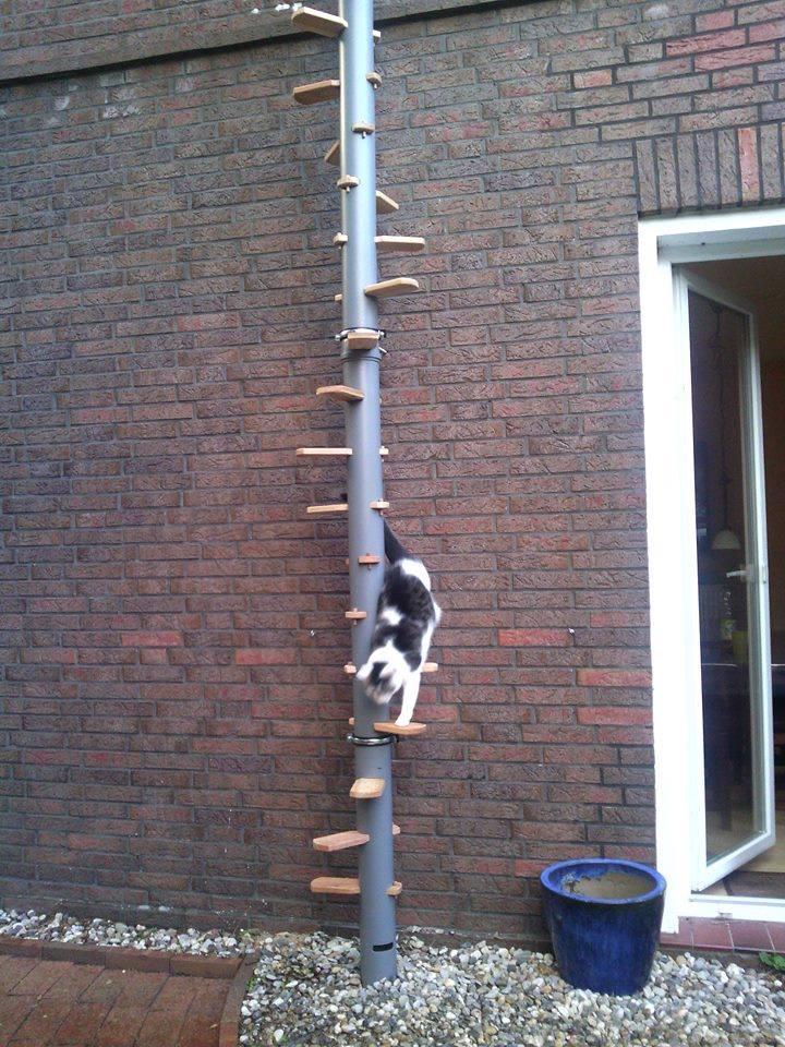 Katzenleiter Katzenwendeltreppe für Außen