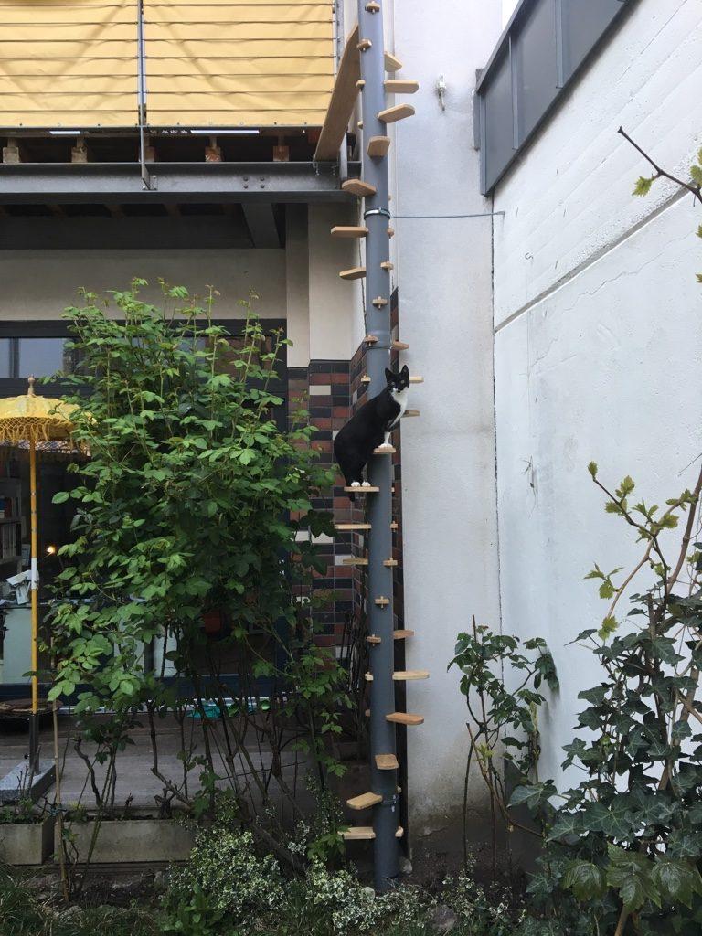 Katzenleiter Katzentreppe in grau am Balkon