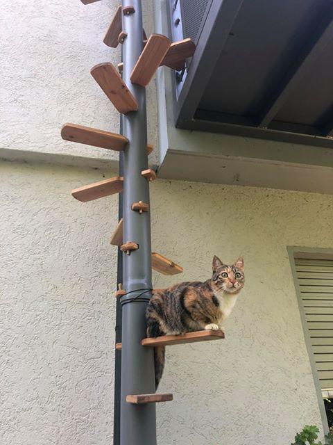 Katzentreppe-fuer-Balkon-Cattrip